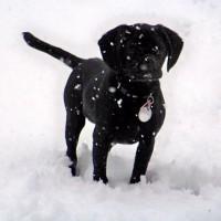Snowy Murphy