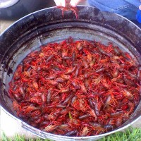Crawfish Boil in Nola