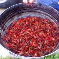 Crawfish Boil in Nola